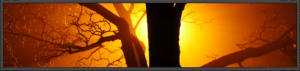 Screen Shot 2015-10-04 at 1.32.56 PM